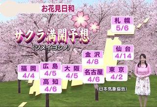 VSOP 4月1日 用 サクラ 開花 .jpg
